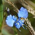 Mt. Lemmon Flower by Dennis Boyd