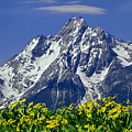 1m9224-mt. Moran  by Ed  Cooper Photography