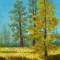 Mt. Pinos Trees by Douglas Castleman