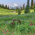 Mt Rainier Meadow Flowers by Harold Coleman