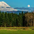 Mt Rainier Moonrise,wa by Vito Palmisano