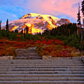 Mt Rainier Morning Glow by Adam Jewell