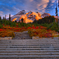 Mt. Rainier Morning Sunkiss by Adam Jewell