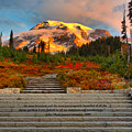 Mt Rainier Sunkiss by Adam Jewell