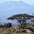 Mt.kilimanjaro by Wade Worsley