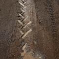 Mud Escape by Stephen Mitchell