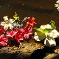 Muddy Flowers  by Mindy Roth