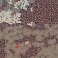Muddy Footprints Over A Carpet by Ashish Agarwal