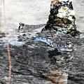 Mudskippers by Nicole Belvill