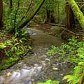 Muir Woods Stream by Matt Tilghman