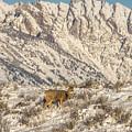Mule Deer Buck In Winter Sun by Yeates Photography