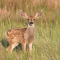 Mule Deer Fawn Is All Ears by Tony Hake