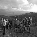 Mule Drawn Wagon by Jennifer E Doll