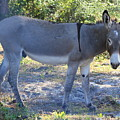 Mule In The Pasture by Michelle Powell