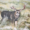 Muley by Debra Sandstrom