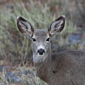 Mulie by Rich Franco