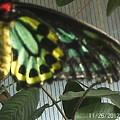 Multi-colored Butterfly by Doris Giardini