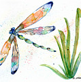 Multi-colored Dragonfly by Erica Tolbert