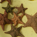 Multi-colored Star Fish On The Sand by Todd Gipstein