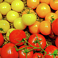 Multi Colored Tomatoes by Robert Meyers-Lussier
