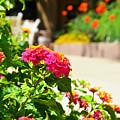 Multicolored Flowers by Korynn Neil