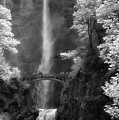 Multnomah Falls Bw by Mike Nellums