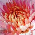 Mum In Pink by Anita Faye