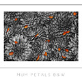 Mum Petals Bw Poster by Mike Nellums