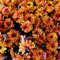 Mums The Word by Bri Lou
