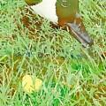 Munching On Green Grass by Karen Matthews