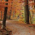 Munich Foliage by Frenzypic By Chris Hoefer