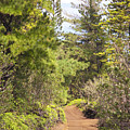 Munro Trail by Ron Dahlquist - Printscapes