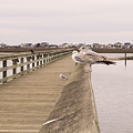 Murrells Inlet Pier With Seagulls by MM Anderson