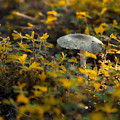 Mushroom 1 by Heather Roper