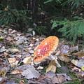Mushroom A Fly Agaric by Yury Bashkin