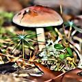 Mushroom And Moss by Modern Art