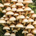 Mushroom Condo by Albert Seger