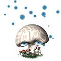 Mushroom Dreams by Carol and Mike Werner
