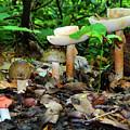 Mushroom Family by Raymond Salani III