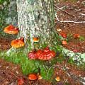 Mushroom Family by Tammy Bullard