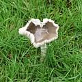 Mushroom Heart by Rich Bodane