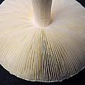 Mushroom Macro Expressionistic Effect by Rose Santuci-Sofranko