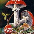 Mushroom Magic by Val Stokes