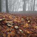 Mushroom Mound by Colin Bruce