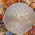 Mushroom On Fall Floor by LeeAnn McLaneGoetz McLaneGoetzStudioLLCcom