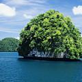 Mushroom-shaped Island by Dave Fleetham - Printscapes