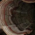 Mushroom Shells by Kim Henderson