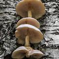 Mushroom Treehouse by Chris Whiton