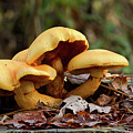 Mushroom Trio by MotionOne Studios