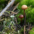 Mushroom Tundra by Ben Upham III